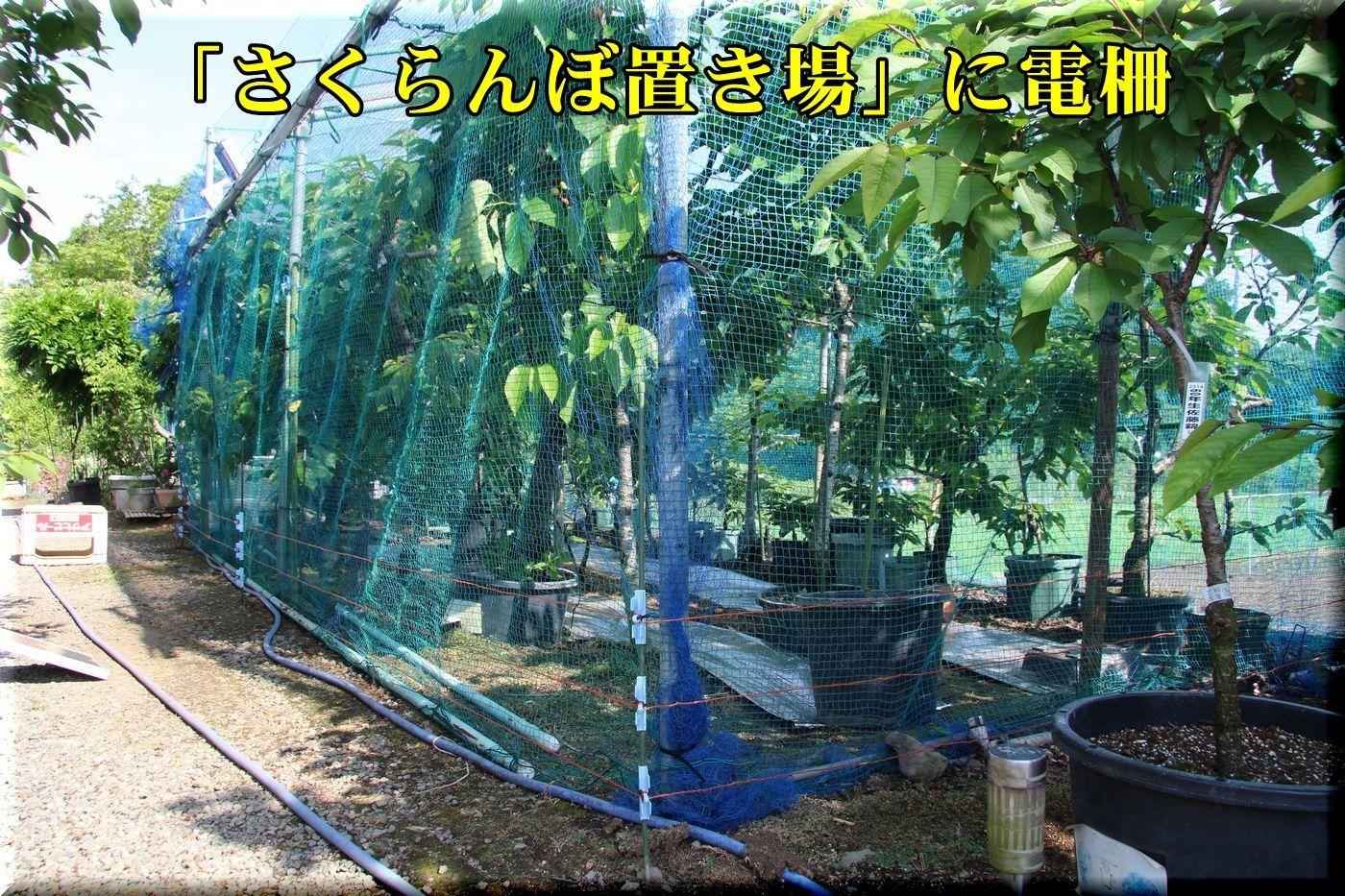 1densaku180512_036.jpg