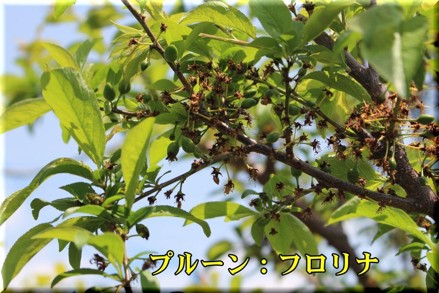1furolina180413_022.jpg
