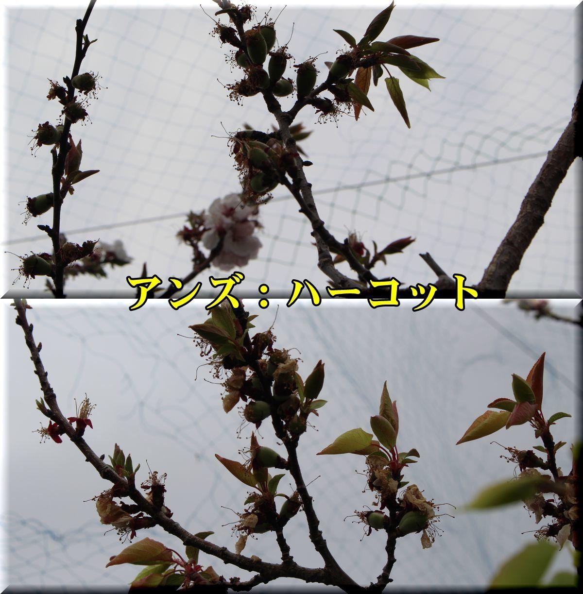 1harcot180405_025.jpg