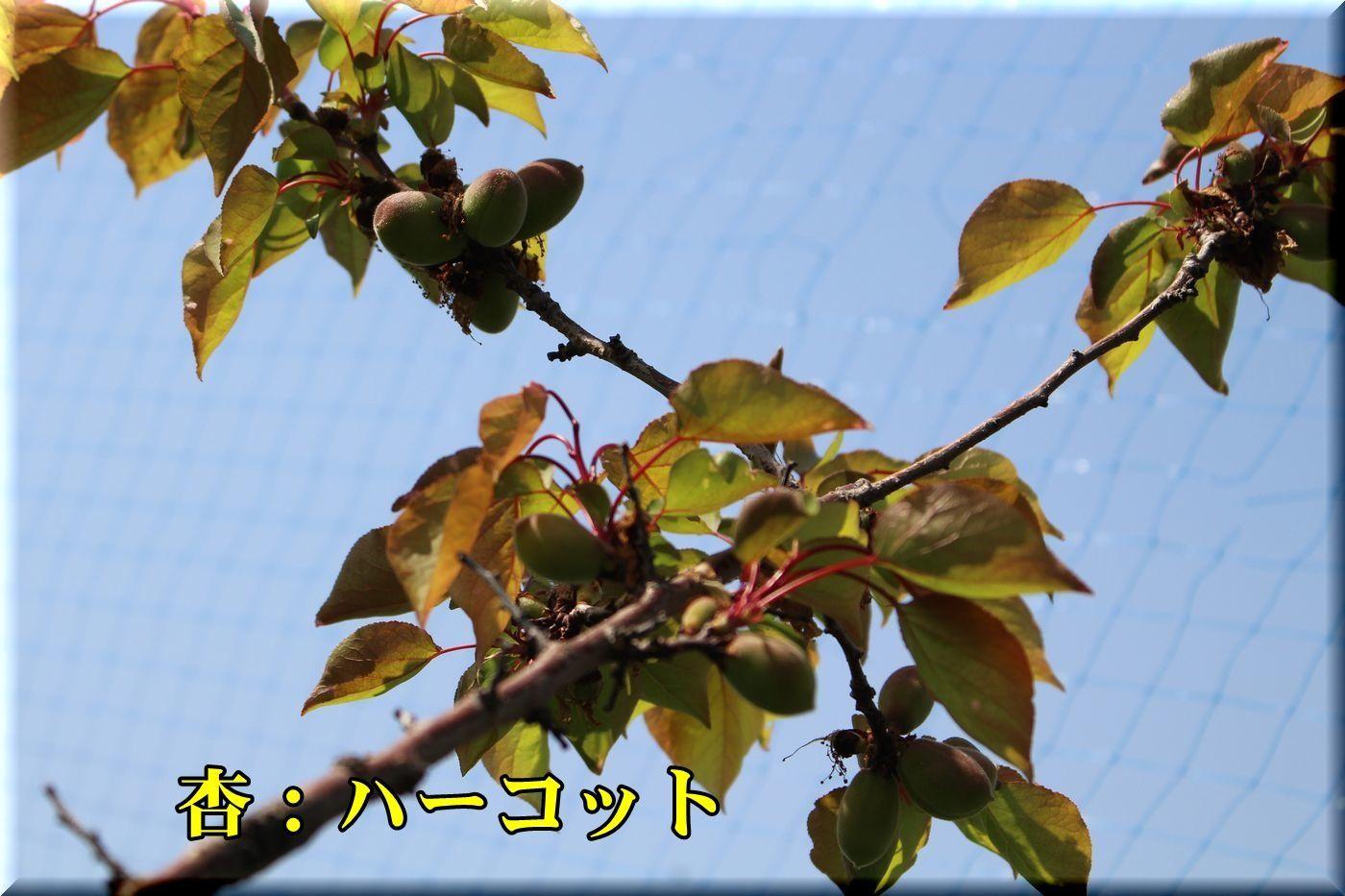 1harcot180413_034.jpg