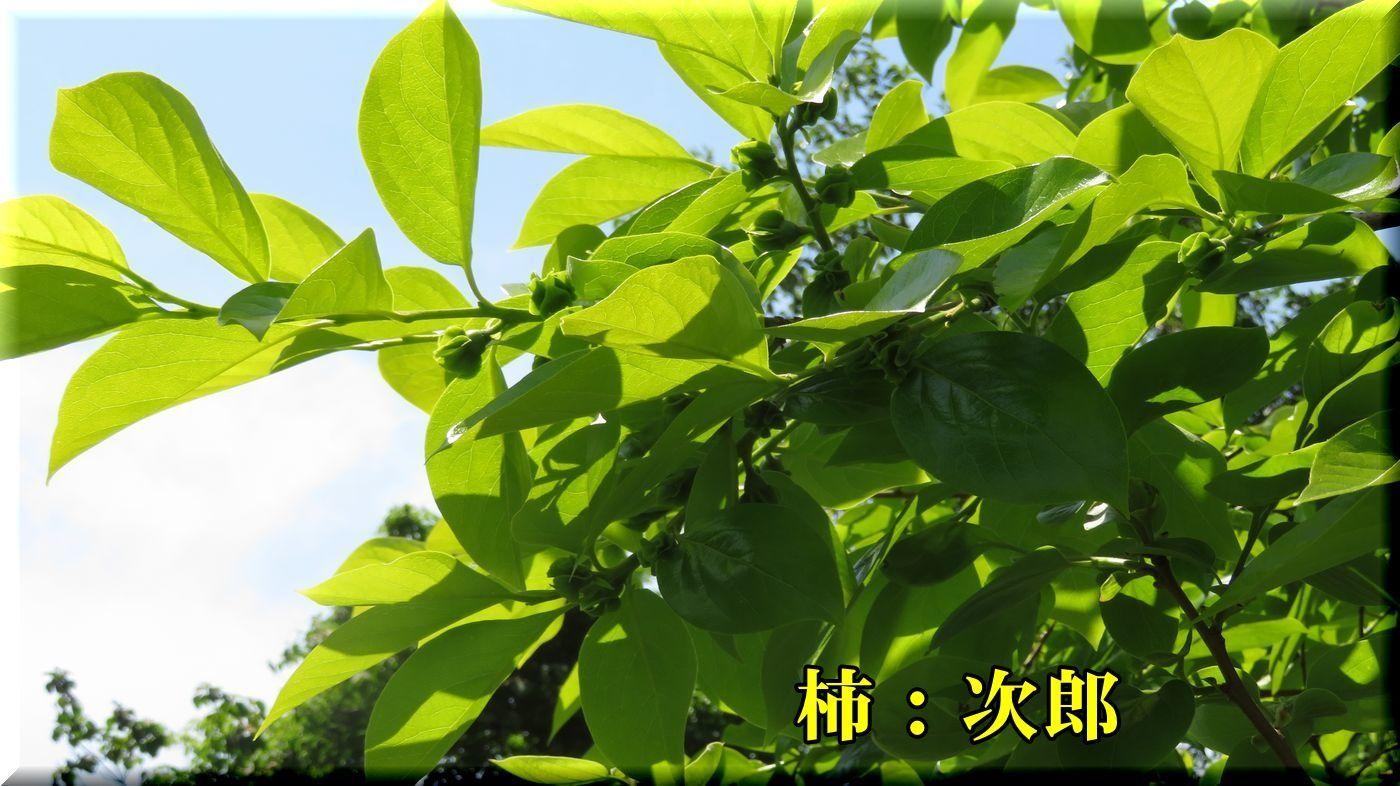 1jirou180430_015.jpg