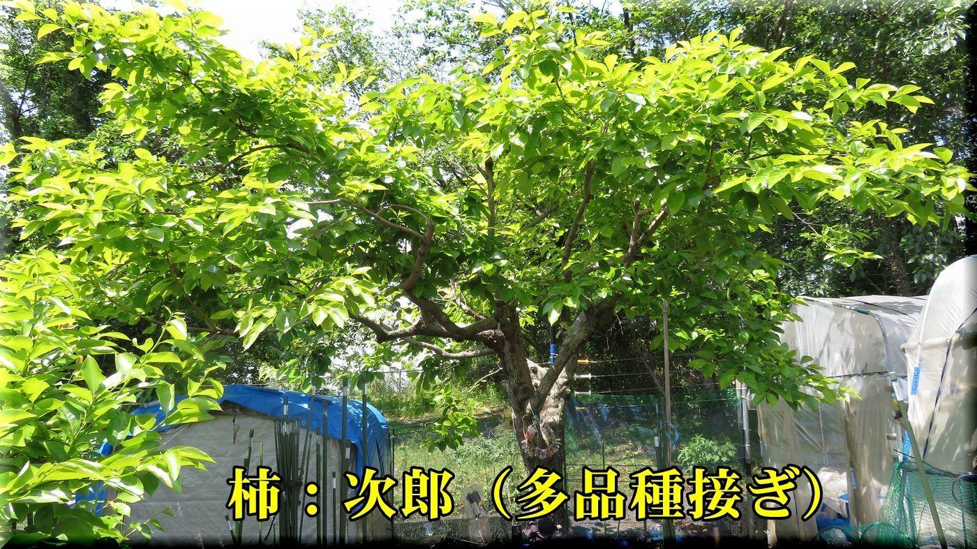 1jirou180430_019.jpg