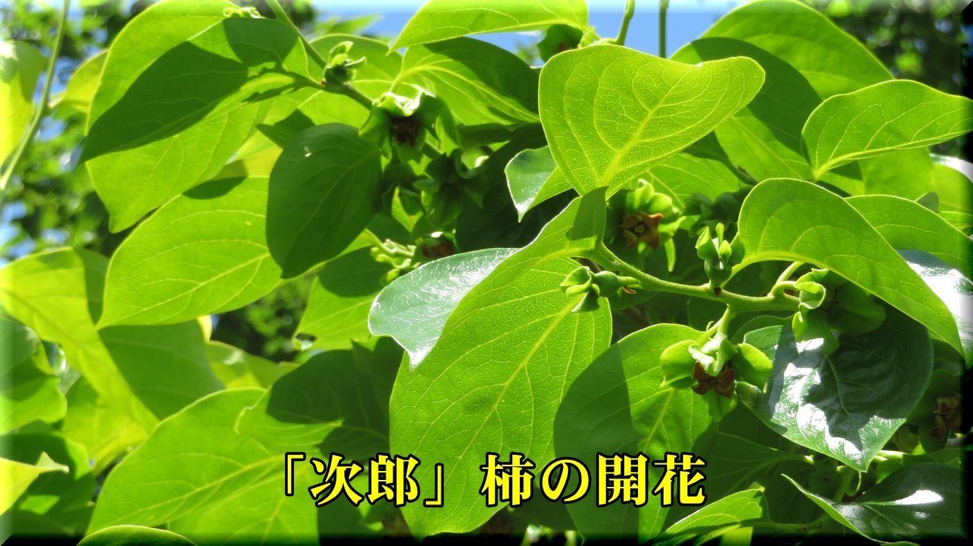 1jirou180514_025.jpg