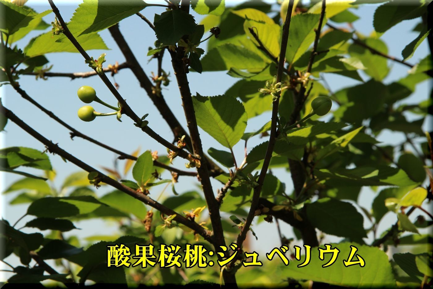 1jyubirium180428_010.jpg