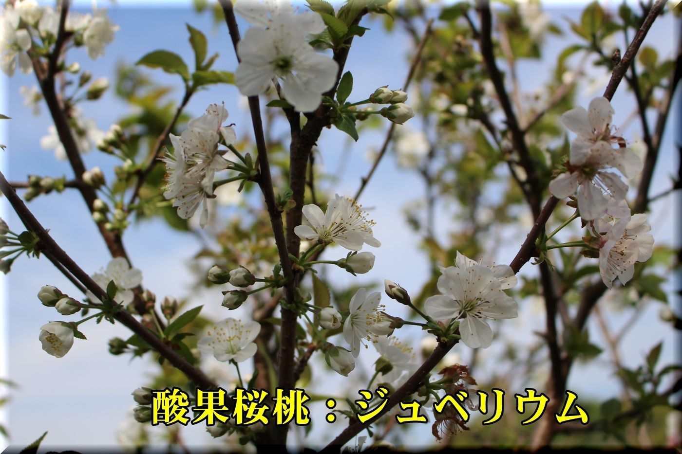 1jyuverium180412_029.jpg
