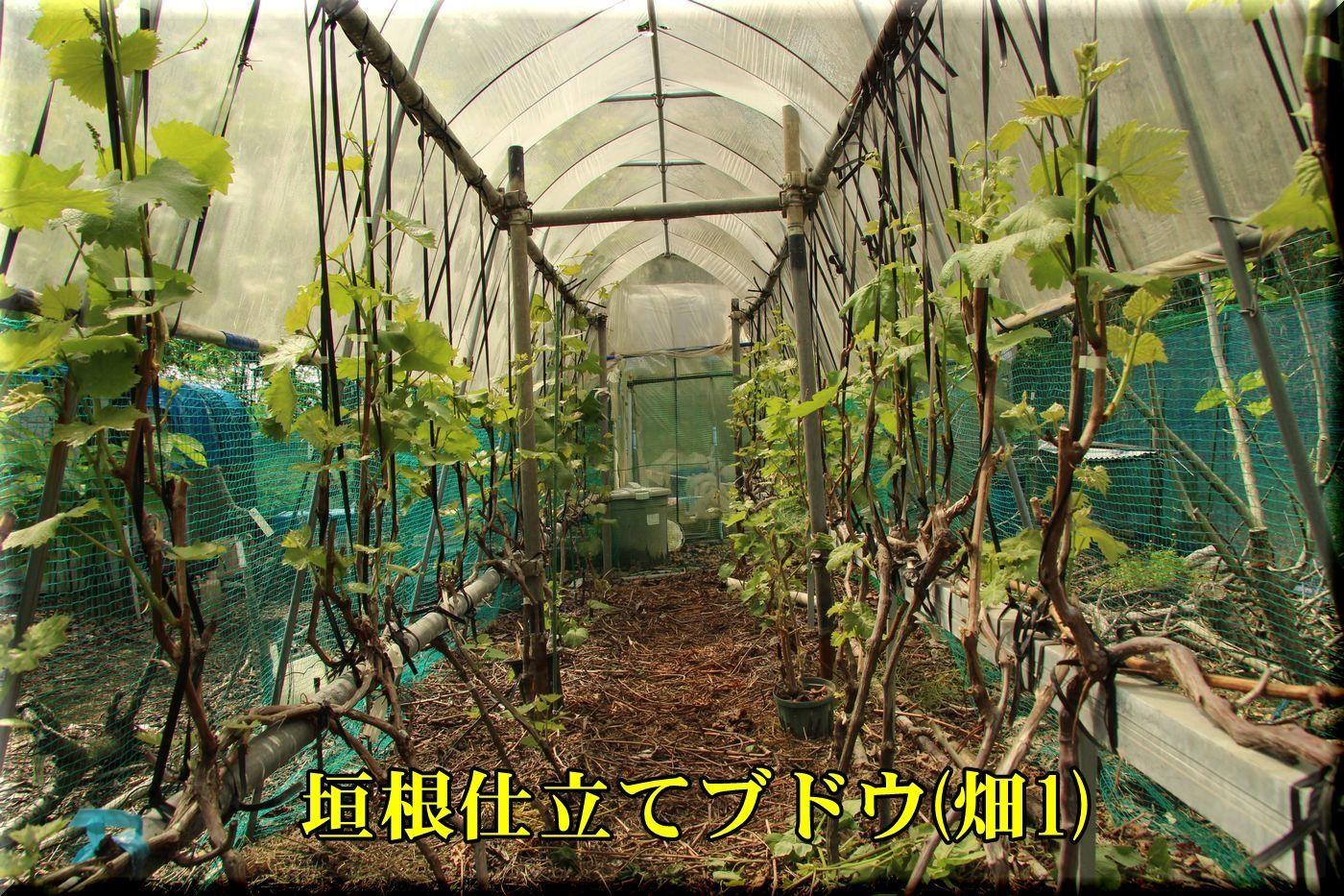 1kakine_rain180426_091.jpg