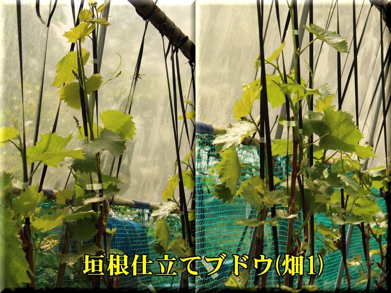 1kakine_rain180426_092.jpg