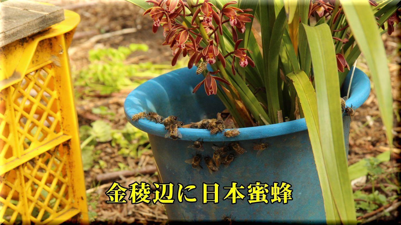 1kinryou180426_095.jpg
