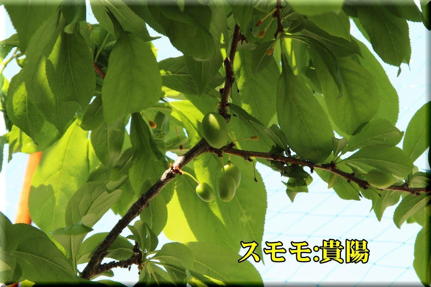 1kiyou180428_024.jpg