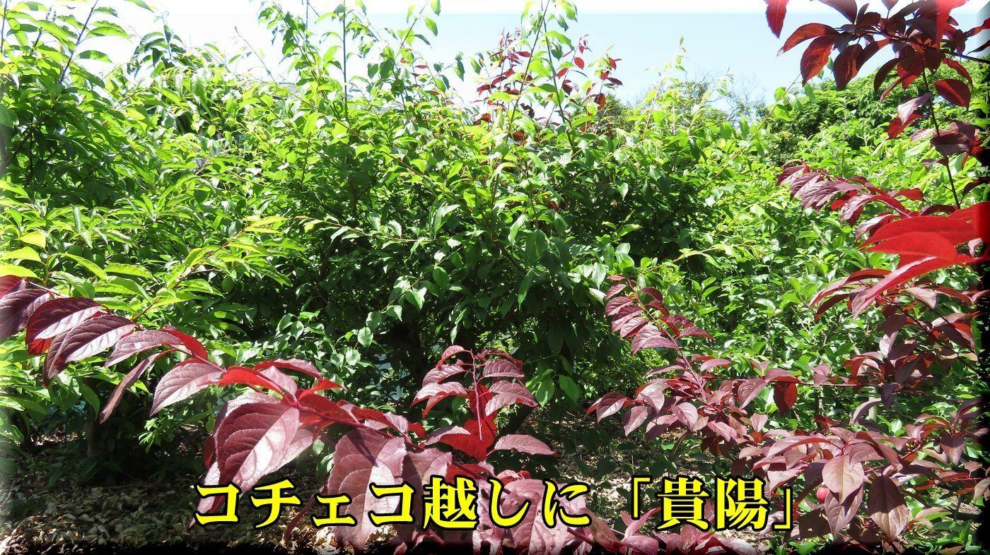 1kiyou180514_015.jpg