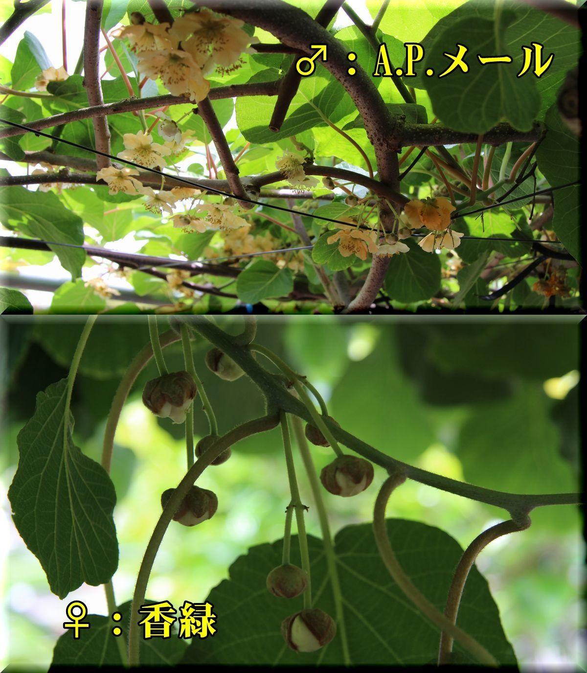 1kouryoku180511_018.jpg