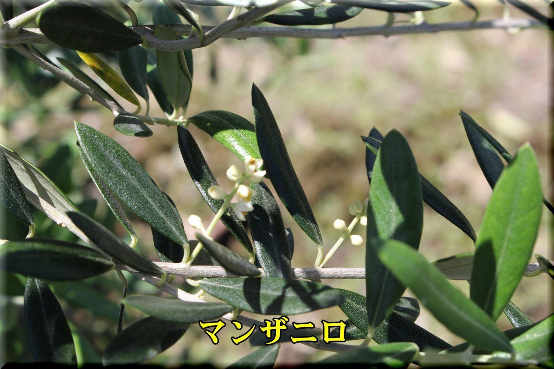 1manzaniro180520_024.jpg