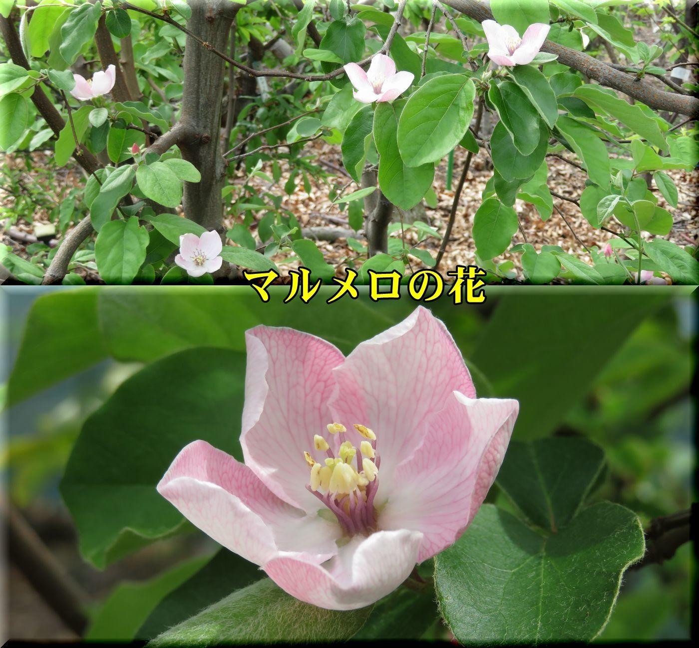 1marumero180412_010.jpg