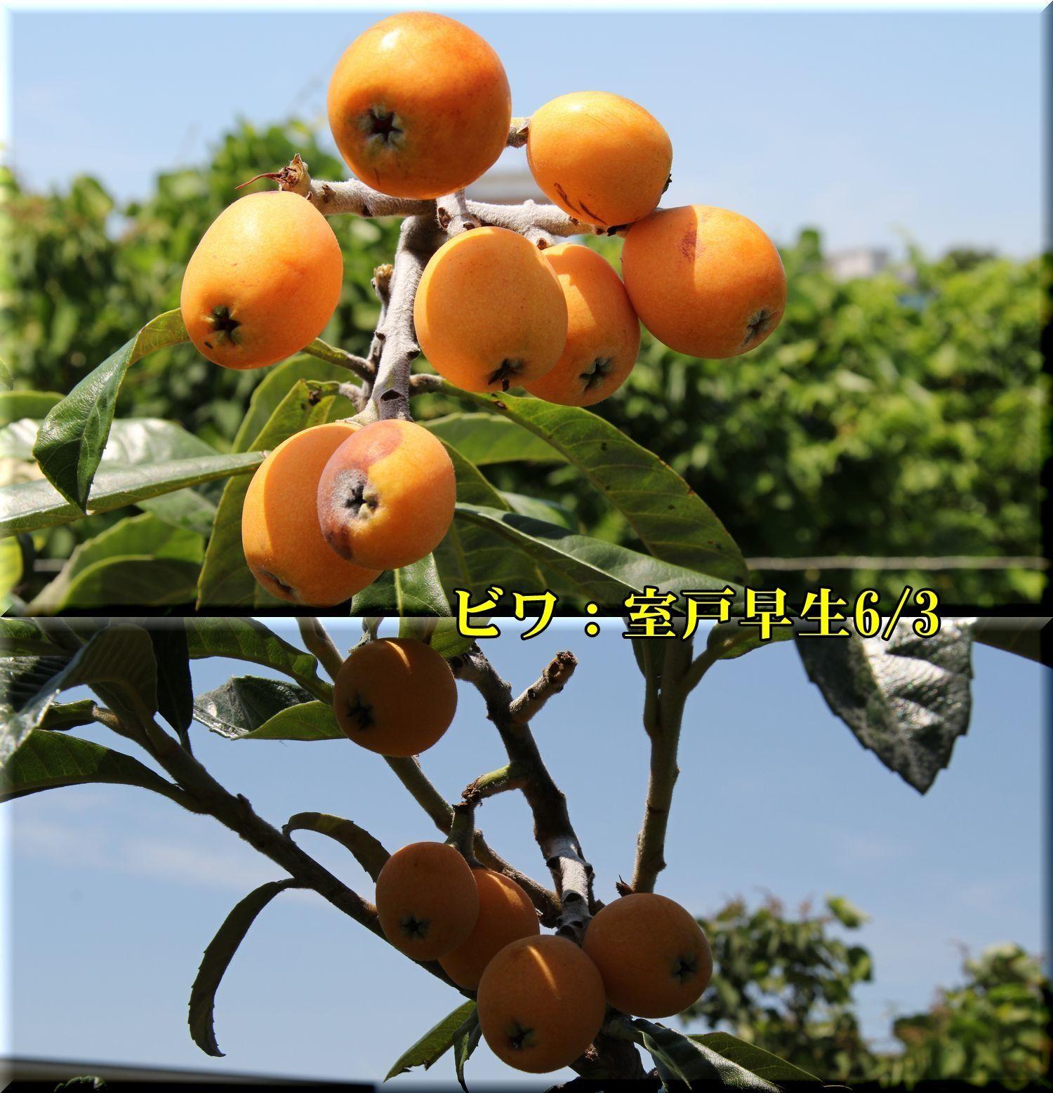 1muroto180603.jpg