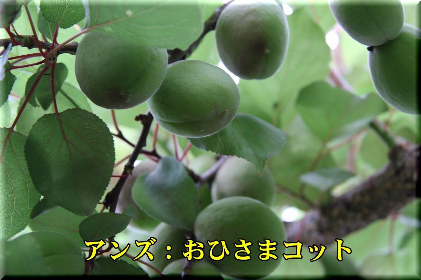 1ohisama180517_025.jpg
