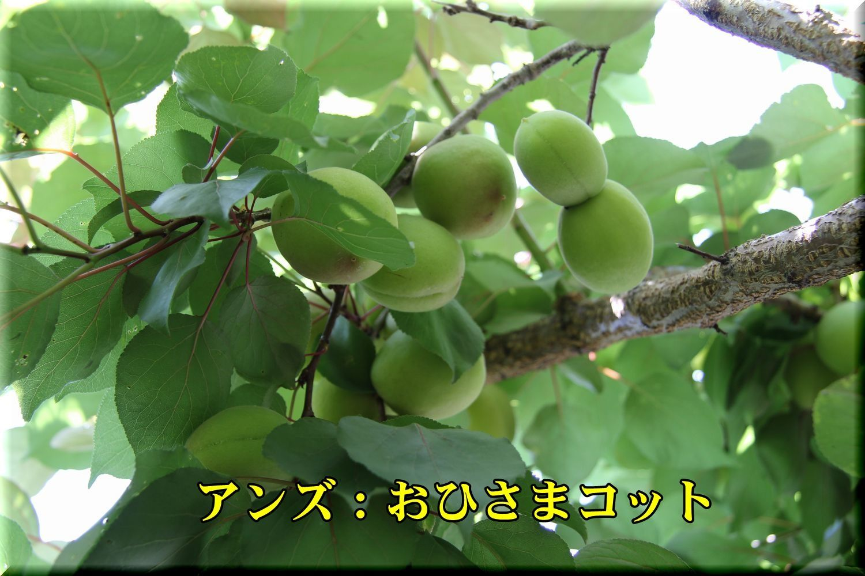1ohisama180604_033.jpg