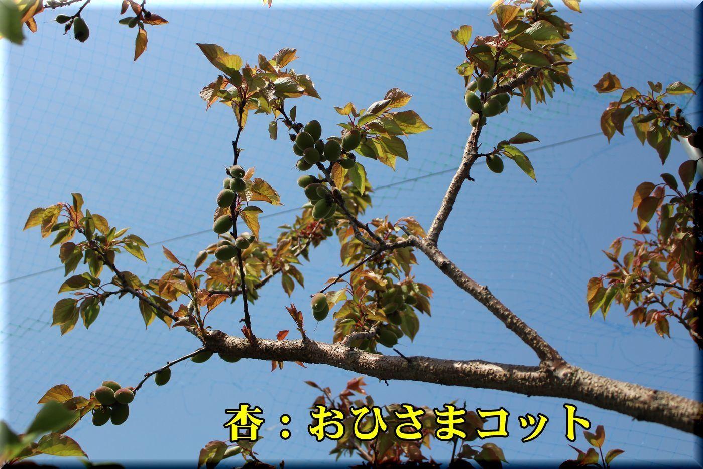 1ohisamacot180413_027.jpg
