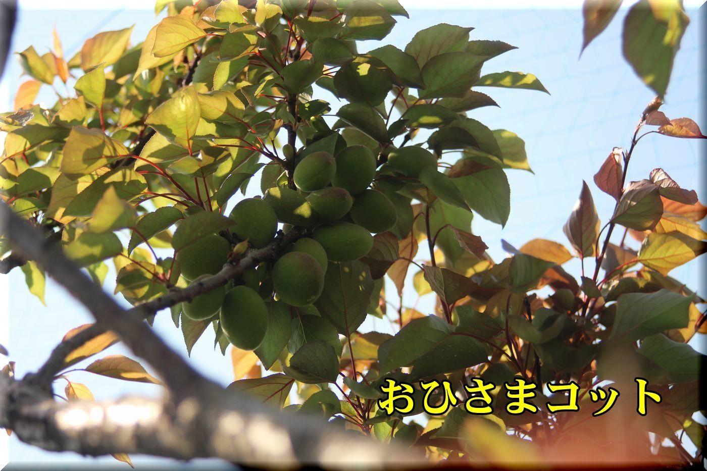 1ohisamacot180420_004.jpg