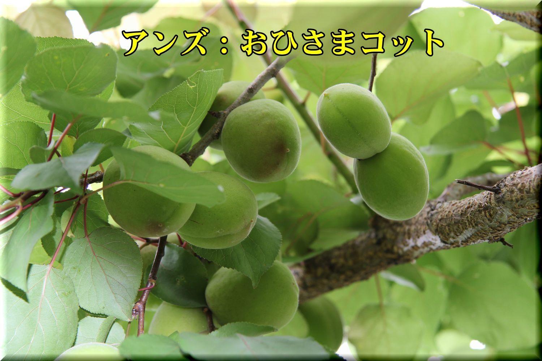 1ohisamacot180529_074.jpg