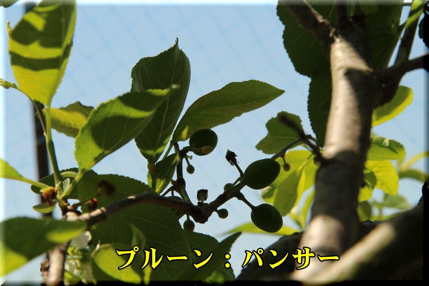 1panser180428_022.jpg