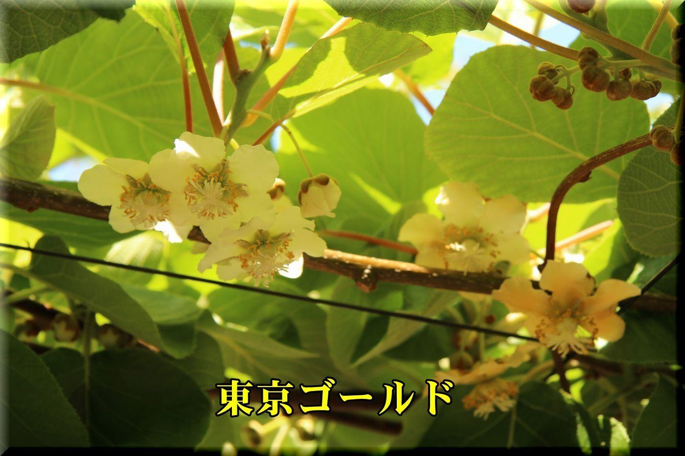 1toukyouG180504_004.jpg