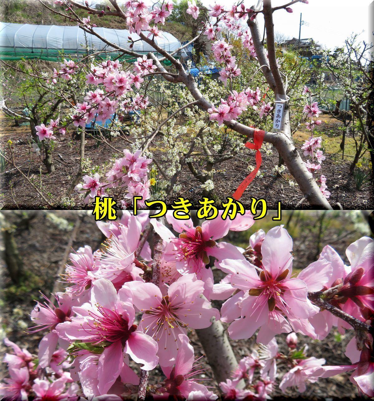 1tukiakari180329_020.jpg