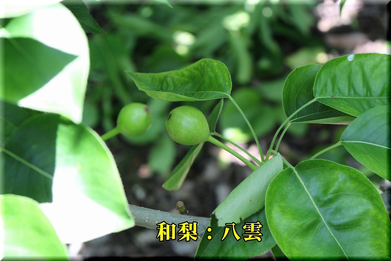 1yakumo180527_009.jpg