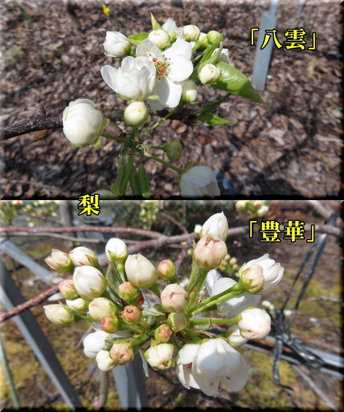 1yakumo_yutaka180329_013.jpg