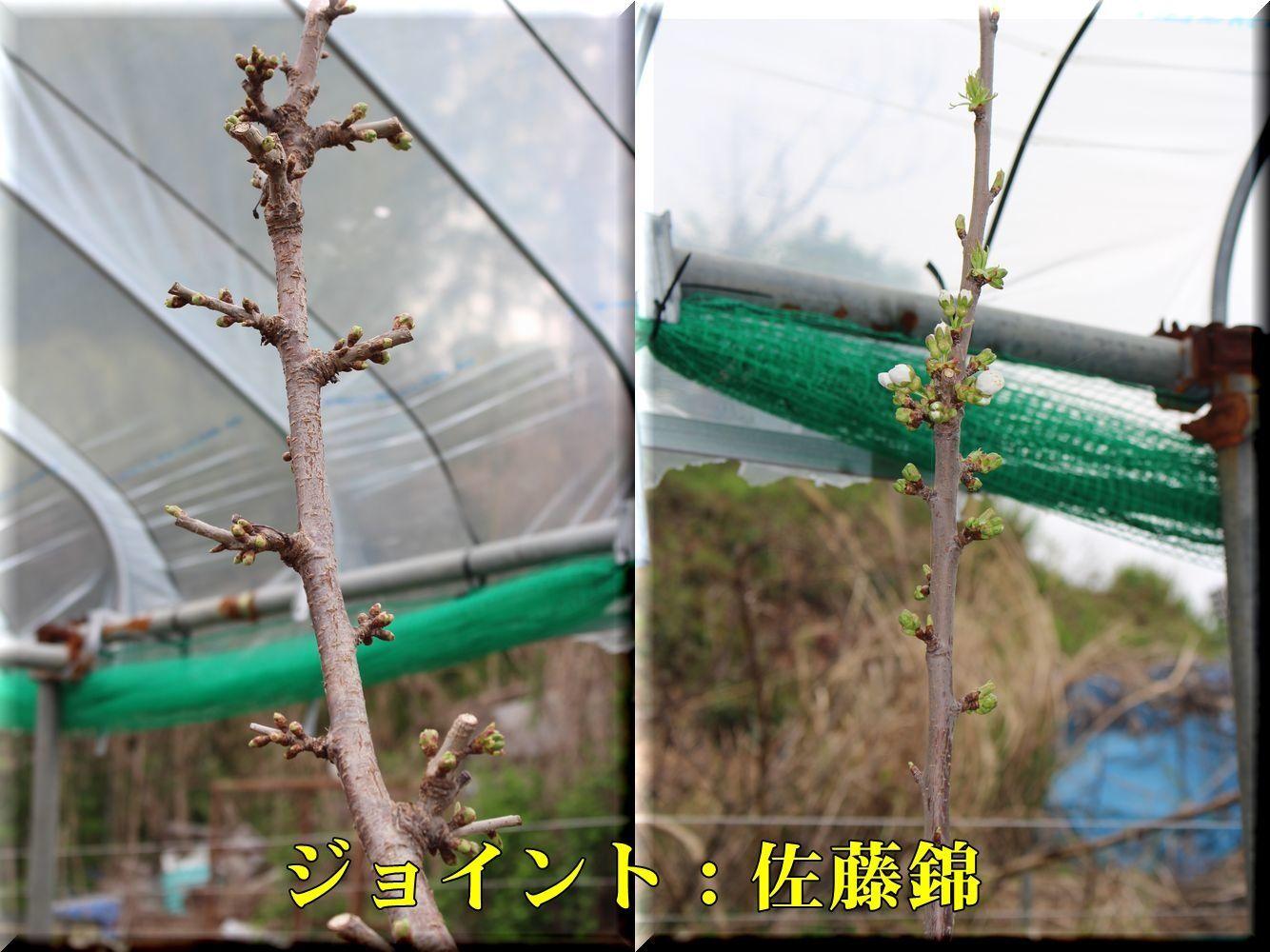 2KHHsato180403_028.jpg