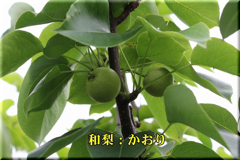 2kaori180526_041.jpg