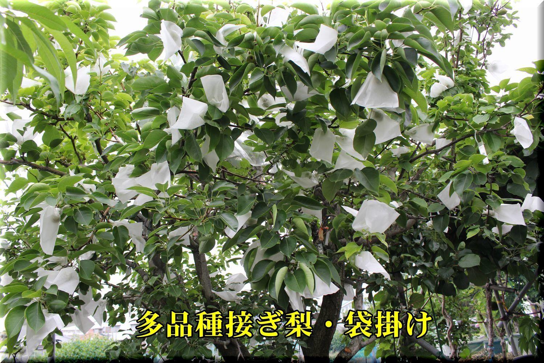 2nasi_fukuro180528_002.jpg
