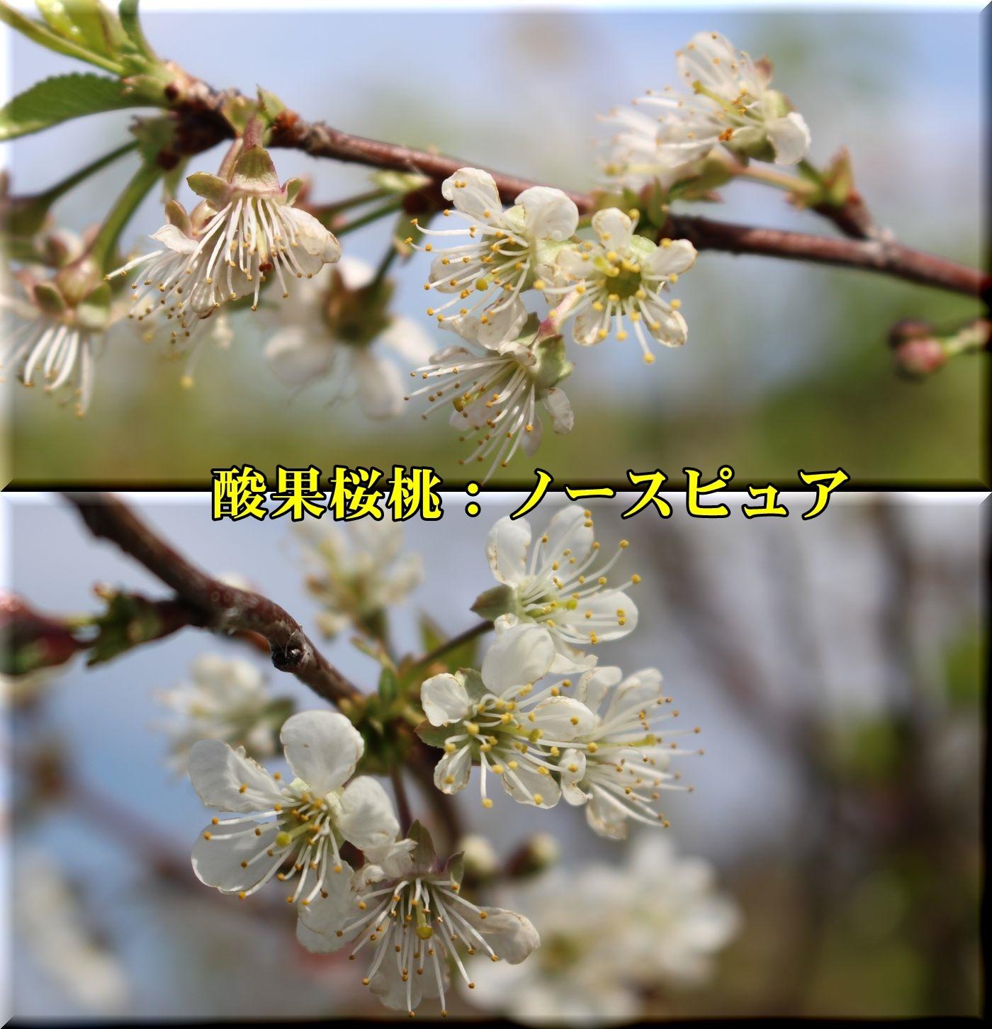 2nothpur180412_033.jpg
