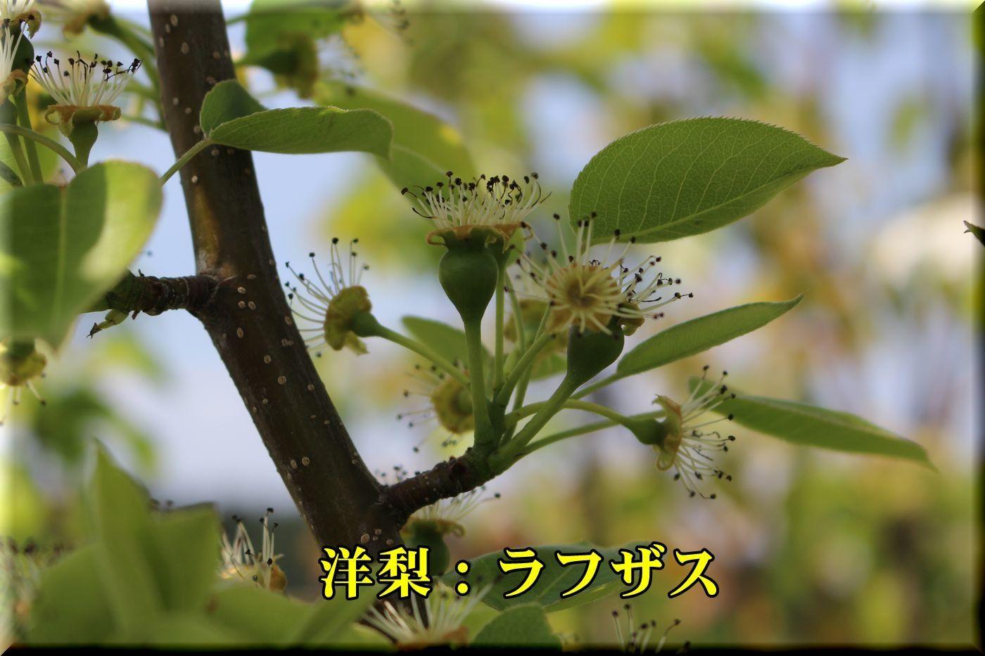 2rafuzas180413_048.jpg