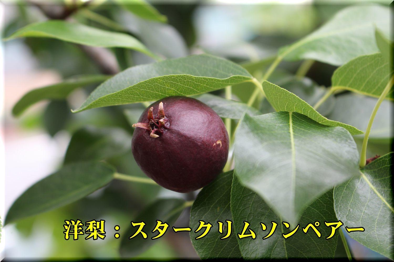 2starCP180526_012.jpg