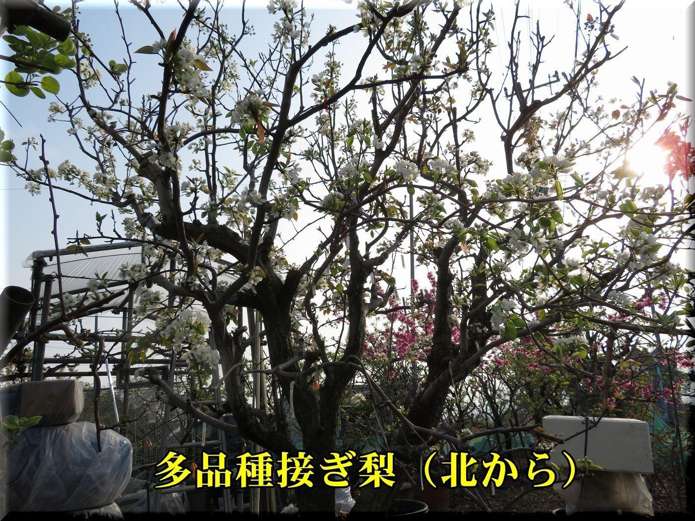 2tahinsyu180402_047.jpg