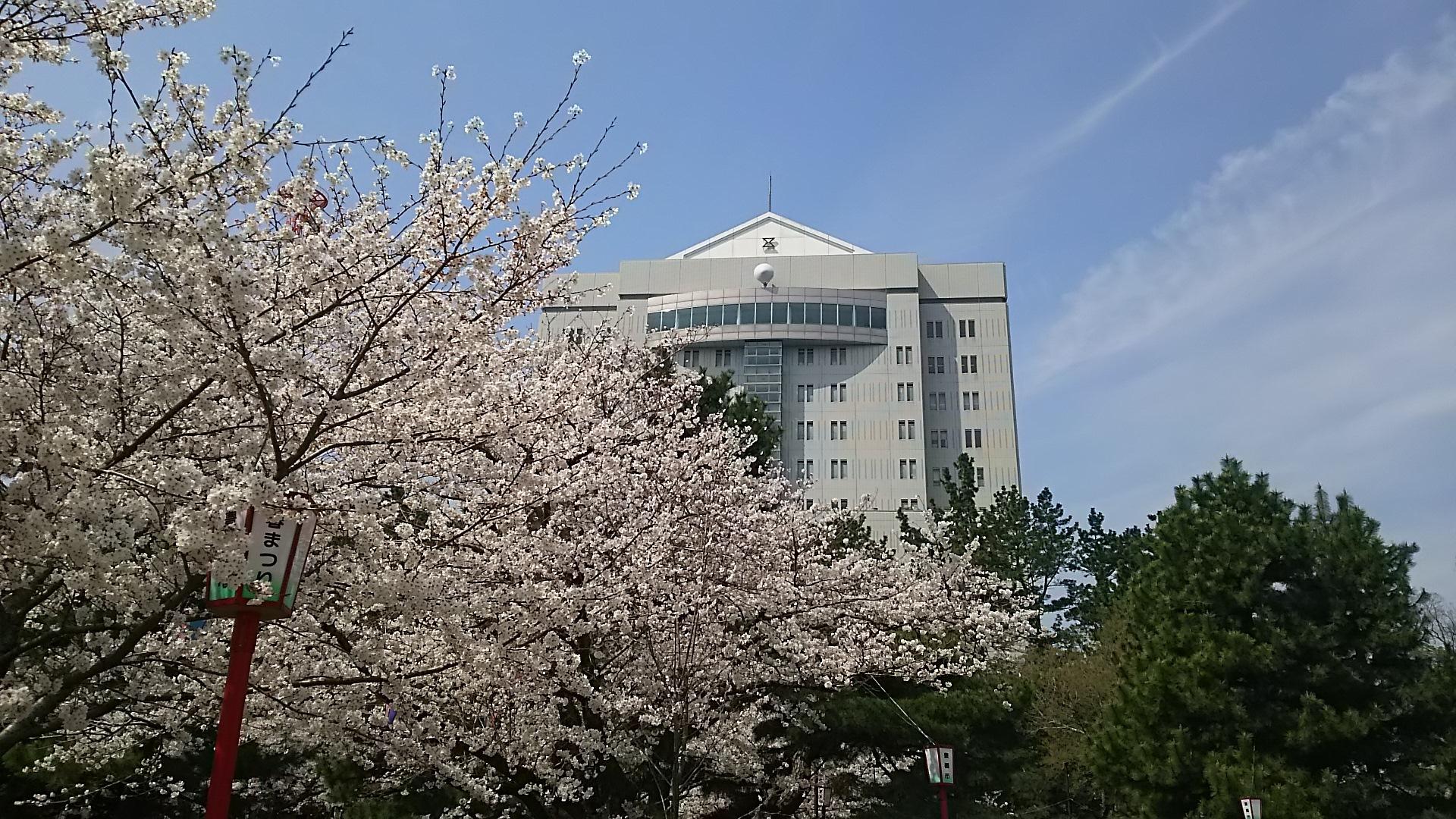 豊橋庁舎と桜
