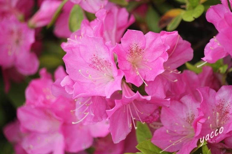 家のそばの花