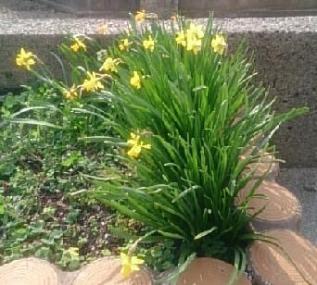 flower@20180401021.jpg