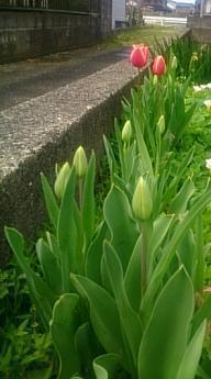 flowers@20170416.jpg