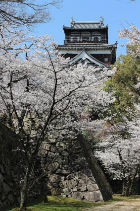桜 019-001