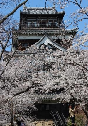 桜 012-001