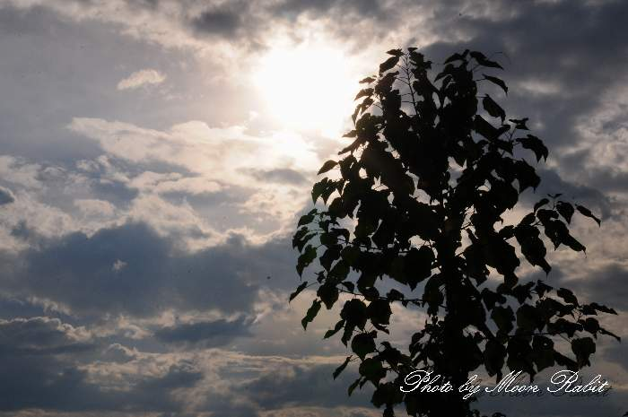 夏の雲 愛媛県西条市中野