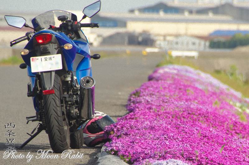 女性ライダー with 芝桜