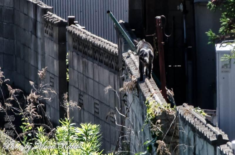 黒猫 愛媛県西条市神拝