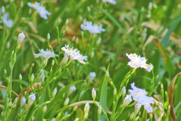 angyohara180408-115.jpg