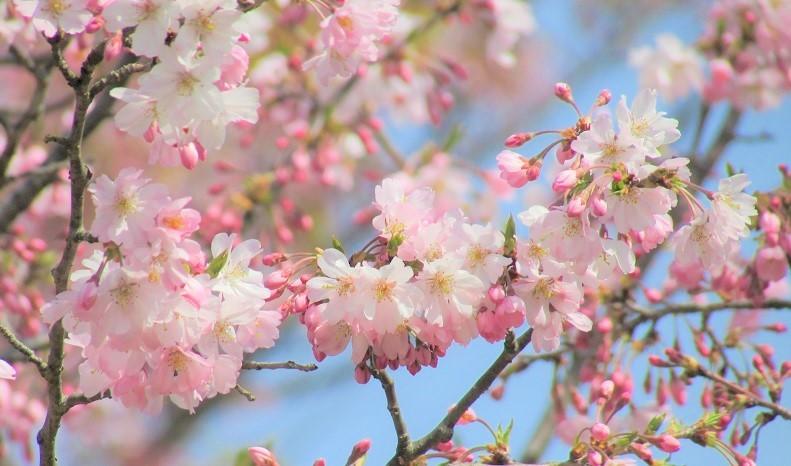 kitamoto-takao180401-102.jpg