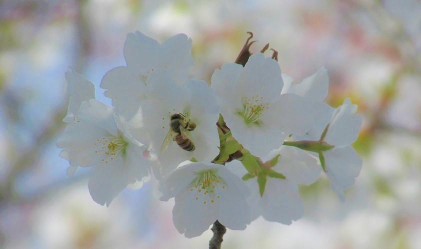 kitamoto-takao180401-106.jpg