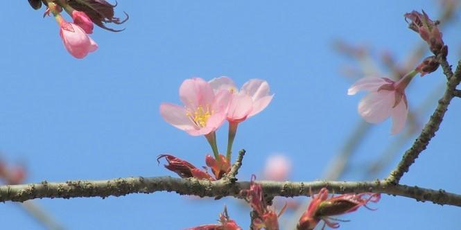 kitamoto-takao180401-111.jpg