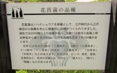 mizumoto180527-202.jpg