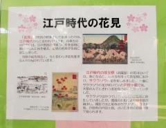 sakurasou180407-203.jpg